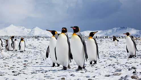 Supporting graphic - picture of penguins