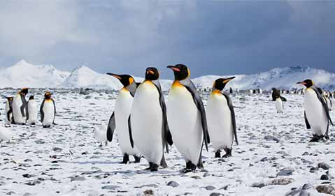 Supporting photo - a group of penguins