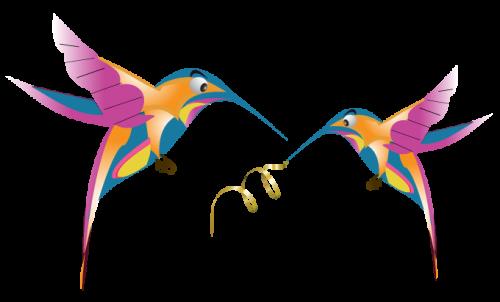 google-hummingbird-free-image-thoughtshift-08