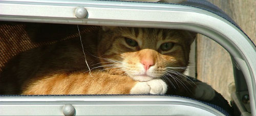 Image source: https://pixabay.com/en/ginger-cat-white-tabby-650545/