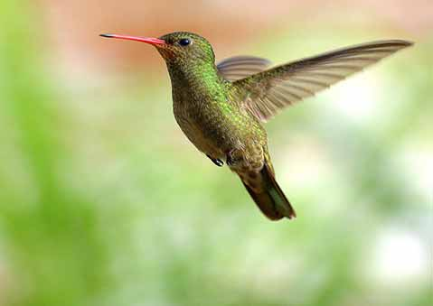 Supporting photo -  a humming bird