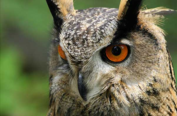 Photo of a owl