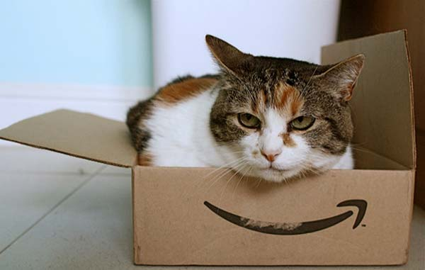 Supporting image - cat in a box