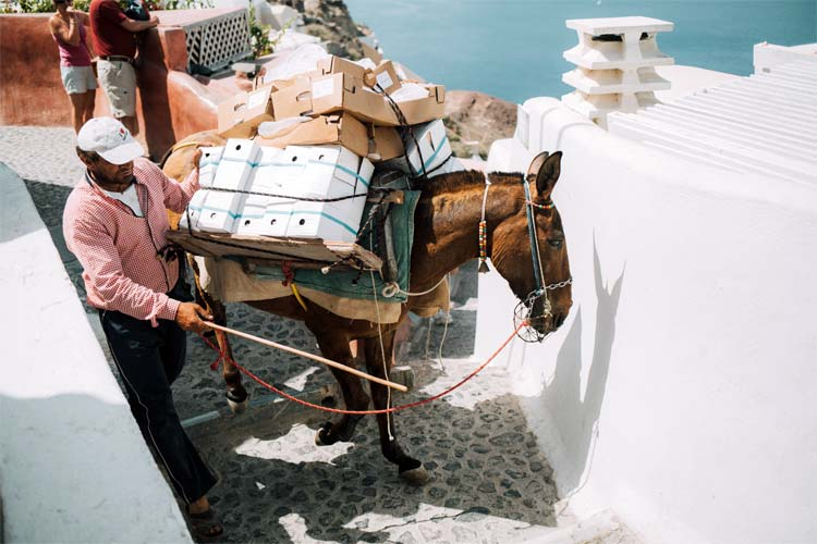 Donkey carrying packages