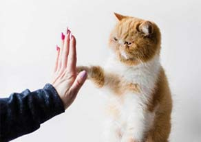Cat giving high 5